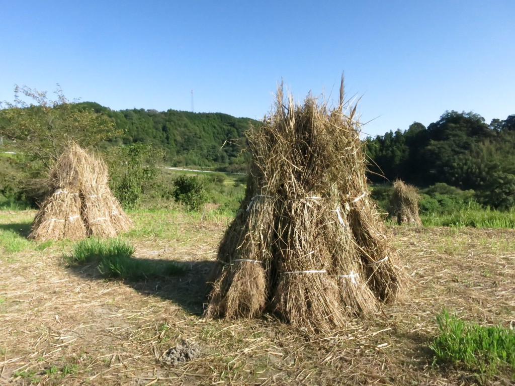 IMG_5823茶草場農法